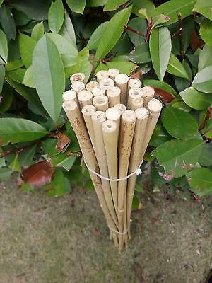 """25pcs 35"""" Gardening Bamboo Poles 90cm  for Planting Support"""
