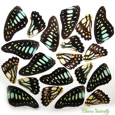 GIFT 32 pcs REAL BUTTERFLY wing material ooak fairy / DIY artwork / jewelry #23