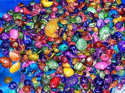 1/2 Lb Small  Dyed Multi Colored Mix  Sea Shells Beach  Decor Nautical Craft