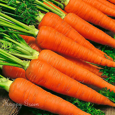 CARROT AUTUMN KING 2 - Vegetable - 6000 seeds