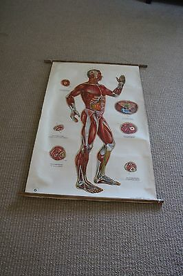 Vtg. Large Accupuncture Linen Cloth Medical Teaching Chart