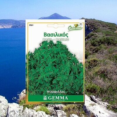 3500 Basil Small Leave Herb Seeds Ocimum basilicum Aromatic BEST QUALITY  Plant