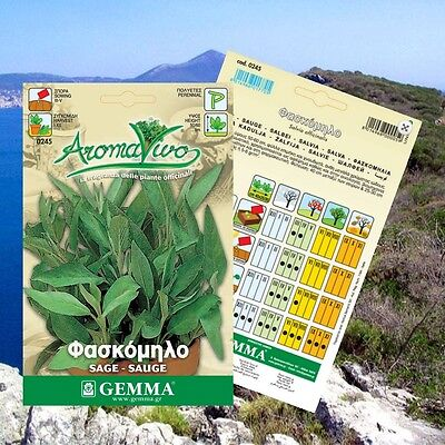 150 Sage Herb Seeds Salvia officinalis Aromatic BEST QUALITY Garden Plants