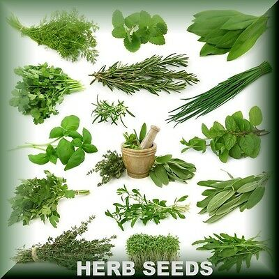 Fresh Herb Seeds Varieties BEST QUALITY Aromatic  Medicinal Spices Garden Plants