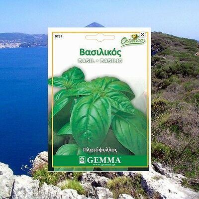 3500 Basil Large Leave Herb Seeds Ocimum basilicum Aromatic BEST QUALITY Plant