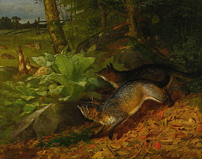Beard Holbrook William Foxes And Rabbits Canvas 16 x 20   #3535