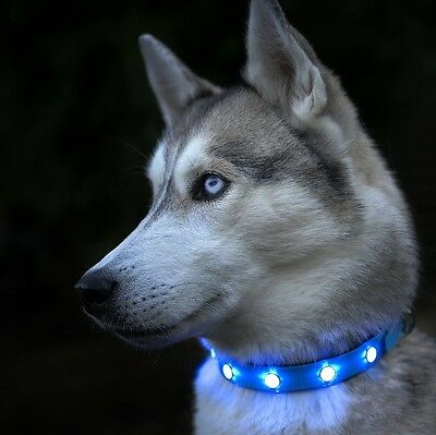 Auraglow Super Bright LED Light Up Dog Collar High Visibility Flashing Safety Pe
