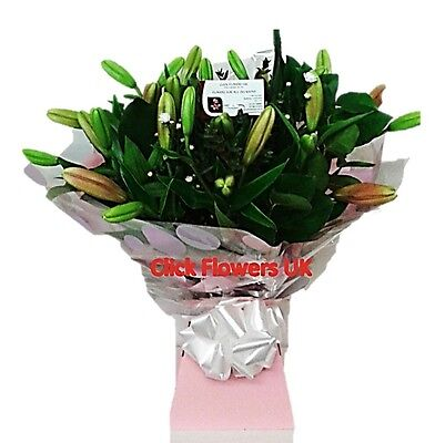Fresh Real Flowers Delivered Choice Lily Selection Florist Choice Mixed Bouquet
