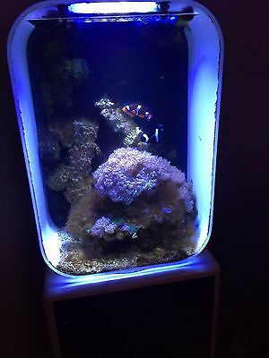 biorb life 60 l marine fish tank aquarium white corals. Black Bedroom Furniture Sets. Home Design Ideas