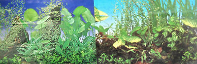 poster fond d aquarium decor plantes double face 150cm x50cm
