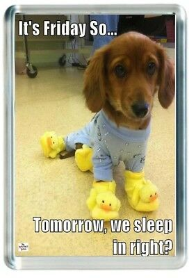 Week End Friday Tomorrow Sleep In Funny Slipper Dog Quote Saying Gift Present No