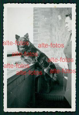 Tiere - animal - Vintage Photo Foto -  Hund - Hunde - dog