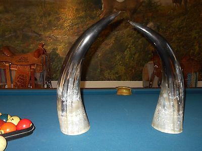 "Pair Of 23.5"" Free Standing Black Powder Watusi Steer Horn,cow Horns,bull,decor"