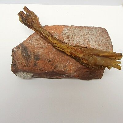 Large Beef Tendon Chew for Dogs - WC010 - Free Shipping