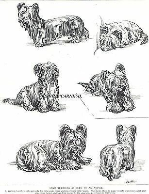 Charming Skye Terrier Dog Sketch  Original 1934 Dog Art Print E. Watson