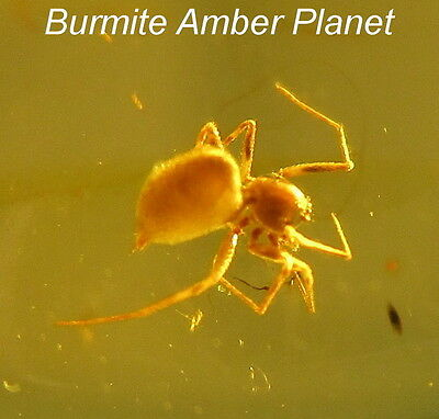 Clear & Well Preserved Euryopis Spider Inclusion in Burmite Amber.