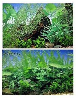 poster fond d aquarium decors plantes double faces  100x 50 cm de hauteur