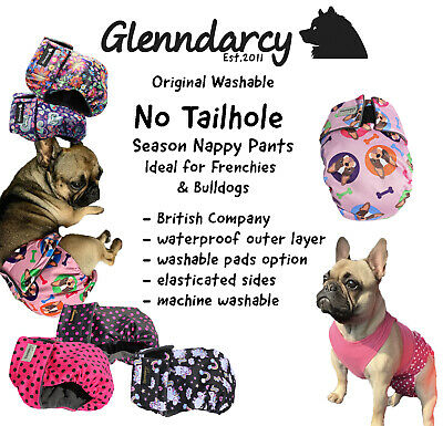 Glenndarcy No Tailhole Female Dog Nappy I French Bulldog | Bulldogs
