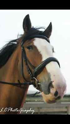 Heavy Horse Padded Leather Bridle