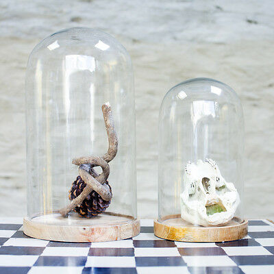 Decorative Glass Dome with Wooden Base - Inu by Nkuku - Cloche Bell Jar Display