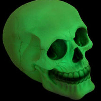 GLOW IN THE DARK SKULL | Collectable Skulls | Unusual Gift | Gothic Cool | Nice