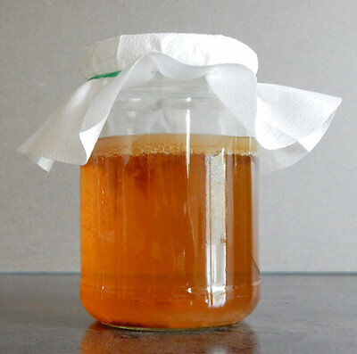 ORGANIC Kombucha Starter Pack Live SCOBY and printed instruction 1st class post!