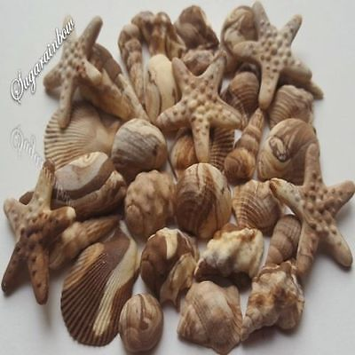 26 Edible Sugar shells seashells decorations cake cupcake toppers beach theme