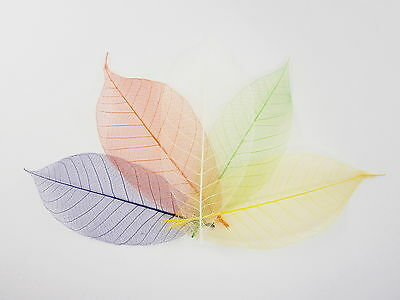 "100 Assorted Colors Skeleton Leaves 4"" 5"" Scrapbook Card Flower Art Decoration"