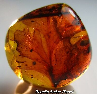 Plant with Leaves & Beetle Inclusions in Burmite Amber.