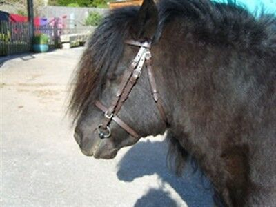 Shetland/small Pony Leather Everyday Bridle With Reins