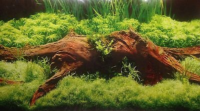 poster fond d aquarium decor double face plantes / bois 80 x 30 cm