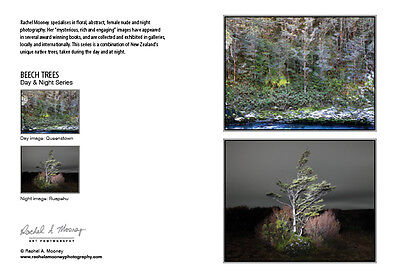 New Photography Card-NZ Native Beech Trees