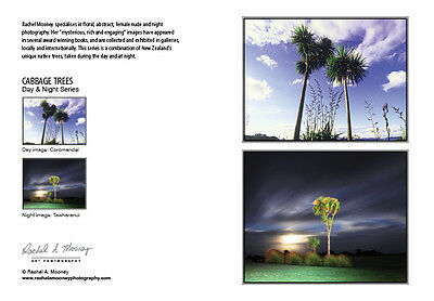 New Photography Card-NZ Native Cabbage Trees