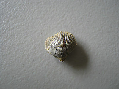Fossil -  Bivalve Shell - from UK found Late1860s    (A19)