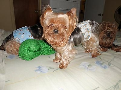 """Set 5 BELLY BANDS FOR YOUR MALE DOG. to fit 10"""" waist only"""