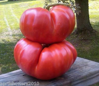 Tomato Giant Tomatoes World's Largest 12 Varieties 275+ Seeds COMBINED SHIPPING