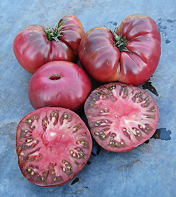 TOMATO BLACK GIANT HARDY EARLY FANTASTIC FLAVOR  10+ Seeds