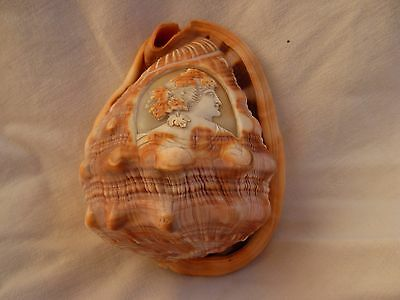 Antique Carved Shell,cameo,early Xx Century