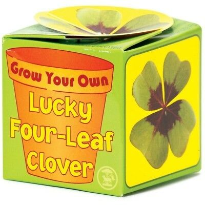 Grow Your Own Lucky 4 Four Leaf Clover Charm In Terracotta Pot Just Add Water
