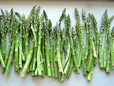 5 X Large Asparagus Plant Crowns - Pacific 2000 - Vegetable Plants