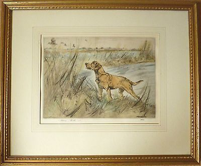 Henry Wilkinson  Signed Limited Edition Etching Print. YELLOW GOLDEN LABRADOR