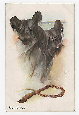 Skye Terrier  Vintage  Dog Postcard signed Arthur Wardle