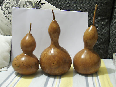 Old gourds varnish with seeds inside