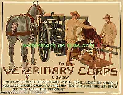 1919 U.S. Army Poster~Join Veterinary Corps~Soldiers~Horses~NEW  Lge Note Cards