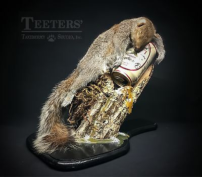 Novelty Drunk Squirrel Rogue Taxidermy Mount Passed Out Funny Yuengling Beer