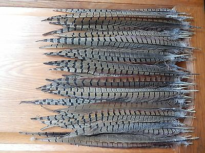 "50+ Cock Pheasant Tail Feathers 12"" - 16"" Fly Tying Arts Crafts"