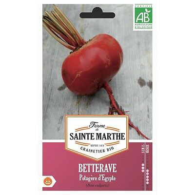 Graines bio de betteraves rouges d'Egypte