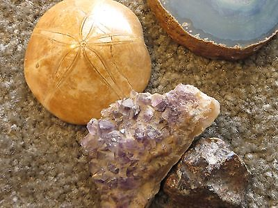 Fossilized sand dollar, plus crystals, carved frog and GEODE!! Sweet!!
