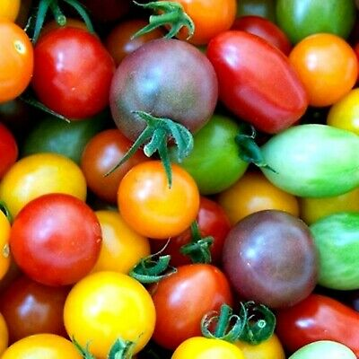 Tomato Rainbow Cherry Mix  40 Varieties ~ Colorful ~ Gourmet ~ Sweet ~ 50+ Seeds