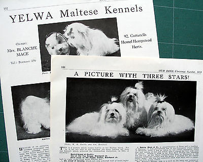 MALTESE TOY DOG KENNEL CLIPPINGS 1930s - 1970s x 30